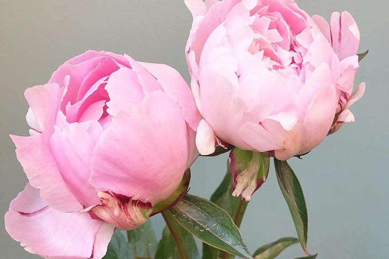 Flowers of Canterbury